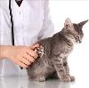 Ветеринарные клиники в Новоалтайске